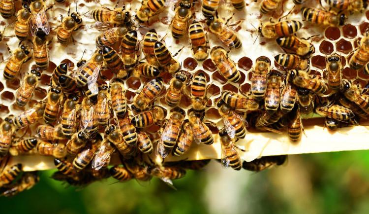 Policie pátrá po pachateli, který ve středu zapálil včelín u Radíkova