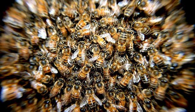 Muž spadl ze žebříku při likvidaci roje včel, nyní leží v olomoucké nemocnici se zraněním hlavy