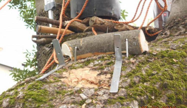 Chlapci nenávratně poškodili památný strom na Zeyerově ulici, chtěli si udělat bunkr