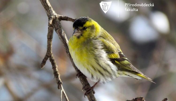 Pevnost poznání a přírodovědecká fakulta se zapojí do Evropského ptačího festivalu