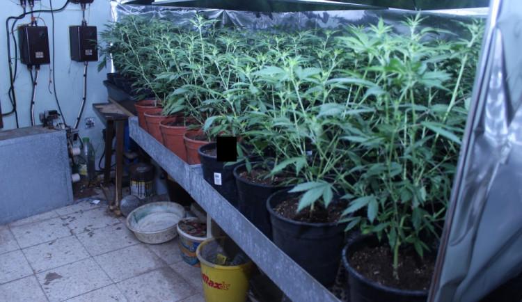 VIDEO: Kriminalisté rozbili gang pašeráků marihuany. Podívejte se na video přímo ze zásahu policie