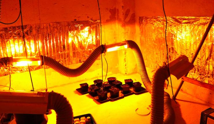 Policie odhalila v bytu cizince pěstírnu konopí. Na případu pracovali několik měsíců
