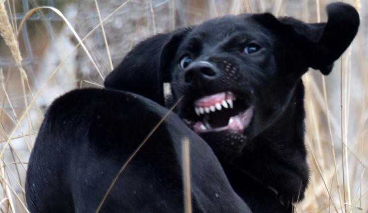 OLOMOUCKÝ ZÁPESNÍK #10: Vzteklý pes napadal bezbranné turisty