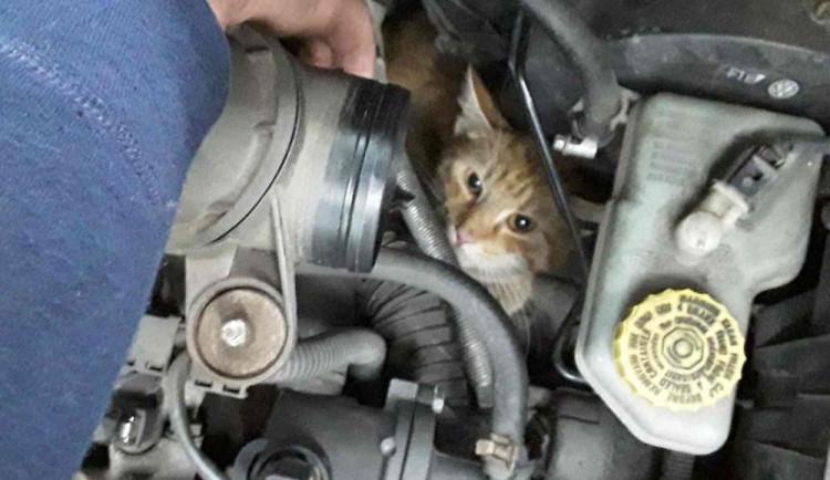 Kočka se zasekla v motoru auta, ven jí pomohli až hasiči