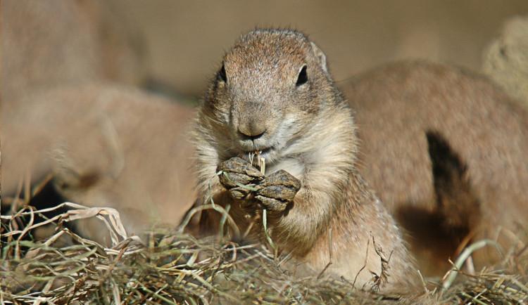 Zvířata v olomoucké zoo spořádala za minulý rok krmiva za 5 milionů korun