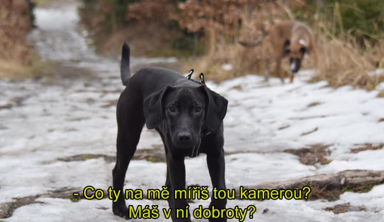 OLOMOUCKÝ ZÁPESNÍK #13: Mluvící pes