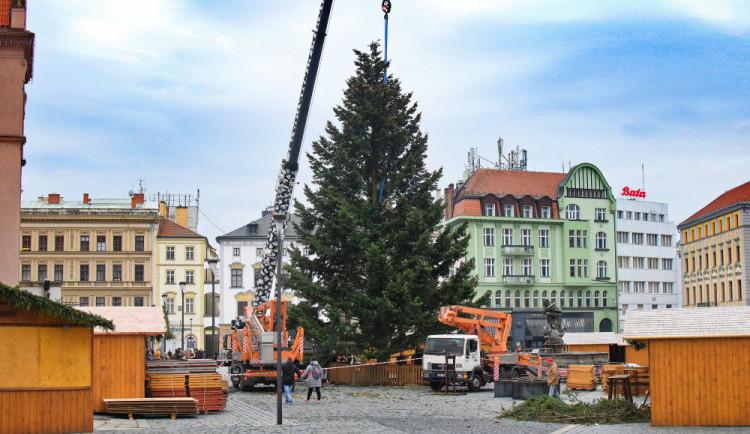 FOTO/VIDEO: Na náměstí už stojí vánoční stromeček. Jméno se dozvíme při pátečním rozsvěcení