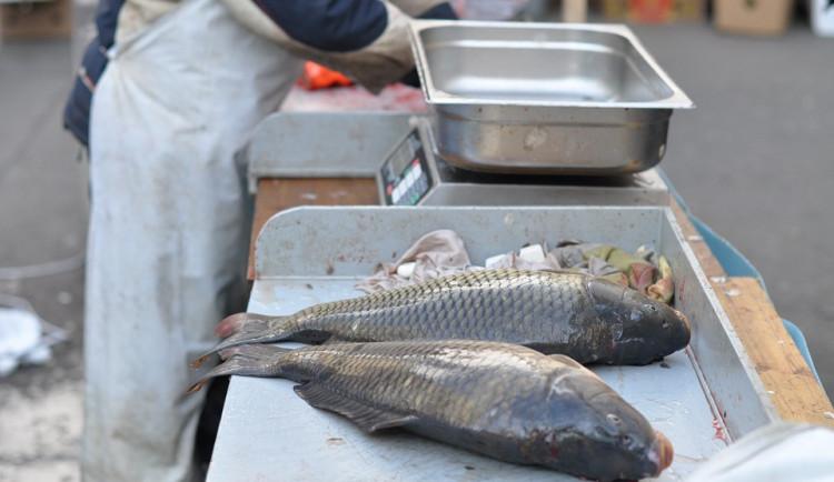 Vánoční ryby opět zdražily. Další růst cen obchodníci v dohledné době nečekají