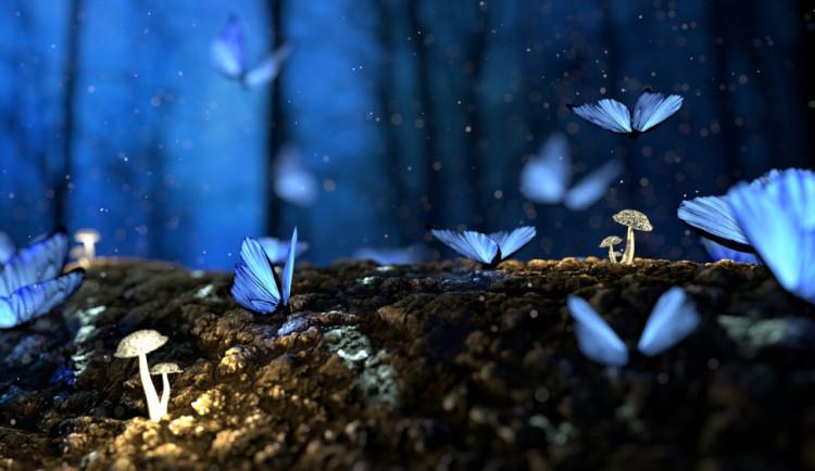 Olomoučtí vědci zjistili, že v Německu klesl počet motýlů o deset procent