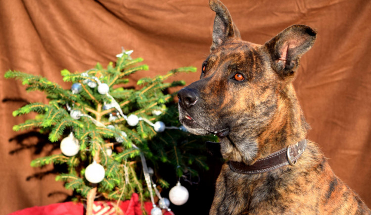 Hledáme páníčka #121: Dopřejte veselé Vánoce i pejskům z útulku