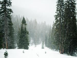 Ani vydatné sněhové přeháňky nedokázaly doplnit deficit vody v půdě