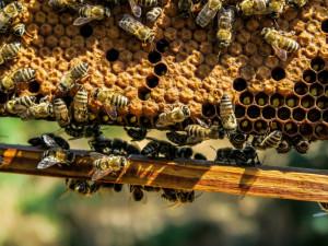 Muž zaplatil za včelstva a úly 600 tisíc korun. Jejich majitel je však prodal už předtím