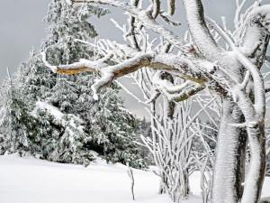 V Jeseníkách je stále dostatek sněhu. S oblevou se potýkají spíše níže položené areály