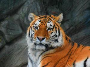 Zoo zveřejnila rozpočet na krmivo jednotlivých zvířat. Nejvíce sežerou lvi