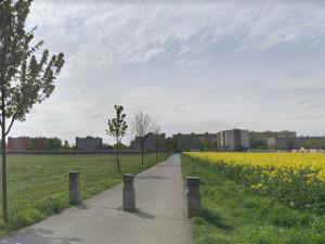 Prostějov zruší alej, kterou vysázeli místní. Stromy ustoupí novým bytům