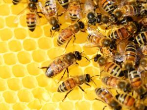 Neznámý zloděj ukradl pět úlů včetně včelstva. Majiteli vznikla škoda téměř za deset tisíc
