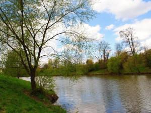 Rybníky v Předmostí se dočkají revitalizace. Řešit se má i ochrana proti bobrům, zpevnění břehů a odbahnění