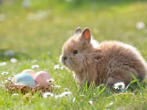 VÍKEND PODLE DRBNY: Skákání v pytli, karaoke, kejklíři, velikonoční dílničky nebo detektivní hra, takové budou letošní Velikonoce