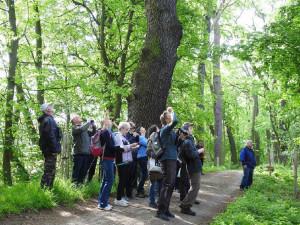 Účastníci Vítání ptačího zpěvu pozorovali v Tovačově 72 druhů ptáků