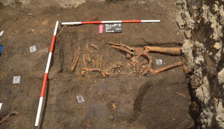 Stopy po syfilisu našli archeologové v hrobě na nádvoří fakulty. Nakažený žil s infekcí v těle pravděpodobně až 20 let