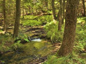 Muži pokáceli tři vzrostlé stromy v lesoparku. Prý kvůli obavám o zdraví veřejnosti