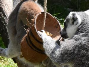 FOTO/VIDEO: Pletence z hadic i bambusové tubusy. Dobrovolníci vyráběli hračky zvířatům do zoo