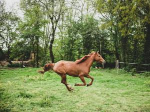Opilý jezdec na koni přijel ke kolotočům. Kůň se poplašil a poškodil elektrický rozvaděč