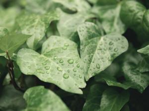 Olomoučtí vědci přišli na novou metodu, jak zjistit odolnost rostlin