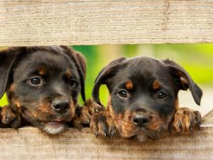 Darujte mi psy k utracení, napsal někdo do olomouckého útulku. Přijel bych si, ale platit nic nebudu