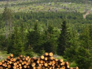 Na Přerovsku pokračuje kácení stromů zasažených kůrovcem, padne dalších patnáct hektarů
