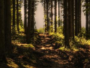 U Olomouce proběhne výsadba stromů. Každým vysazeným stromem pomůžete pacientům s cystickou fibrózou