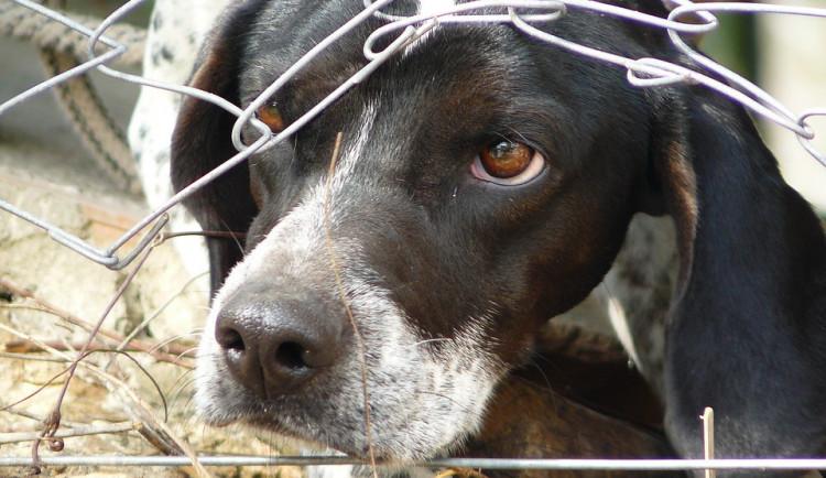Policisté zajistili téměř čtyřicet psů kvůli podezření z týrání