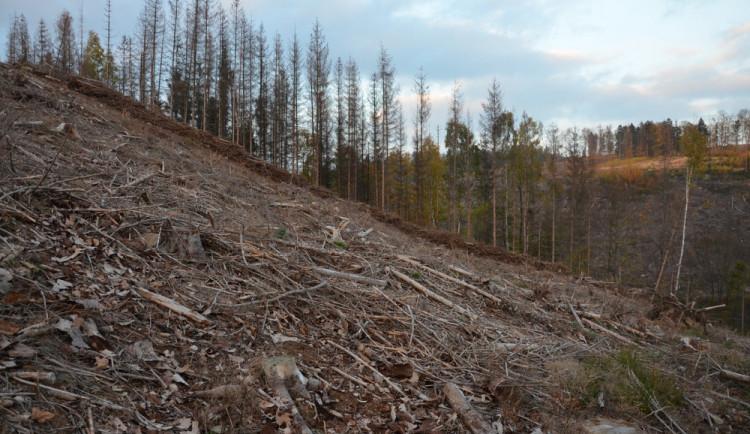 Ekologové chtějí lesy v Jeseníkách ponechat vlastnímu osudu, lesníci jsou proti. Důvodem je kůrovec