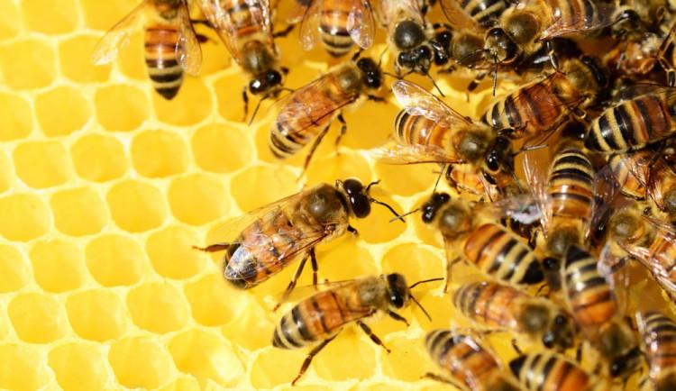 Zloděj si v Hanušovicích odnesl čtyři úly