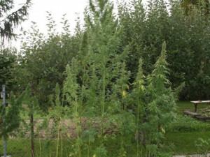 Muži z Hranicka hrozí až pět let vězení, skladoval a distribuoval velké množství pervitinu a marihuany