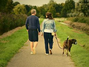 Povinnost očkování, nebo evidence majitelů - přečtěte si, jaké další povinnosti na vás čekají, pokud máte doma psa