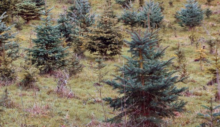 Přerov postavil devět kilometrů oplocení kolem výsadby nových stromků, má je ochránit před zvířaty