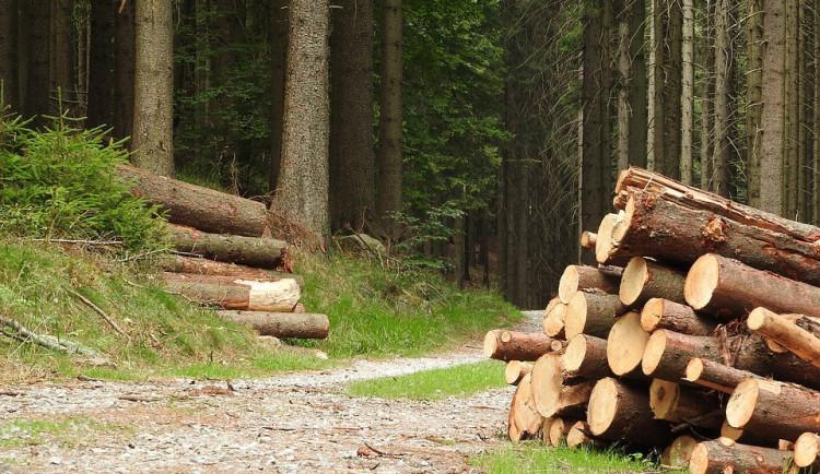 Zloděj ukradl z lesa pokácené buky za padesát tisíc korun, hrozí mu dva roky ve vězení