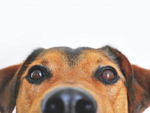 Přerov zruší od ledna kvůli novele zákona vyhlášku o proplacení čipování psů