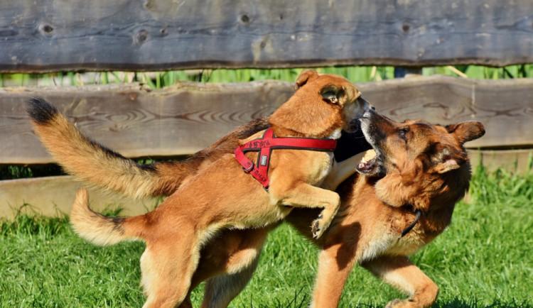 Venčení psa skončilo pěstním útokem