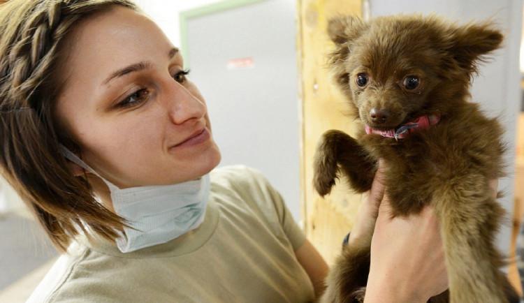 Od příštího roku musí být všichni psi označeni mikročipem. Za nedodržení hrozí pokuta