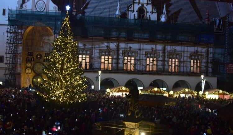 Maličký vánoční strom je v Olomouci raritou. Jak na tom se svou výškou byly stromy v minulých letech?