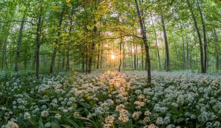 V lese Království na Olomoucku proběhne revitalizace. Bude stát devatenáct milionů