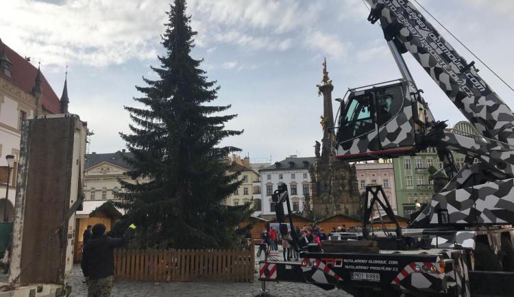 AKTUÁLNĚ: Olomoucký vánoční strom je na svém místě. Je menší než v minulých letech