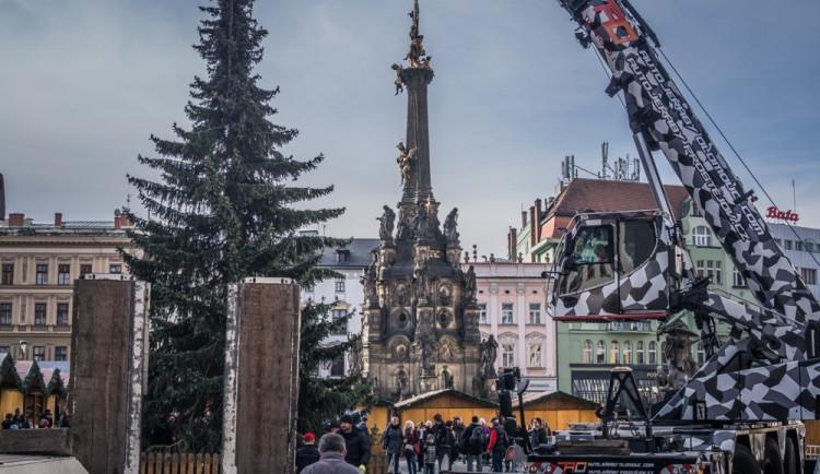 FOTO: Olomouckým vánočním stromem je jedenáctimetrový smrk. Podívejte se