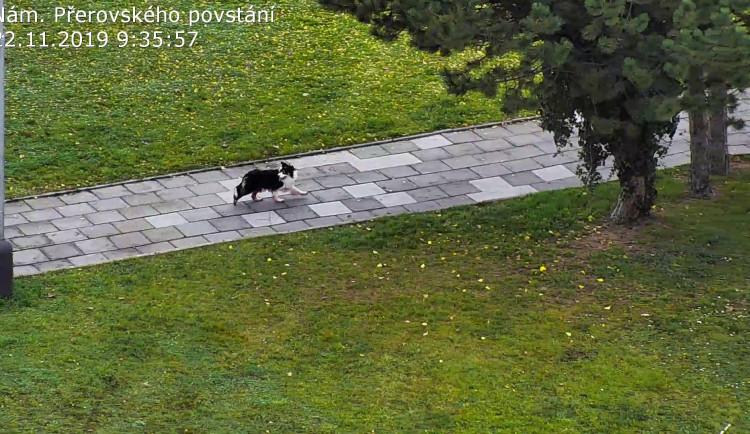 FOTO: Zakrvácený pes se toulal městem. Najít ho pomohli strážníci