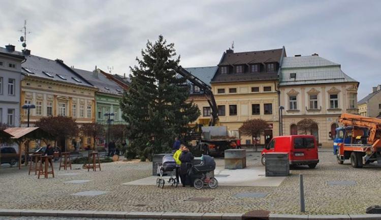 FOTO: Ve Šternberku už stojí vánoční strom. Je z Bohuňovic a rozsvěcovat se bude v neděli