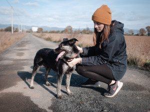 Šťastné a chlupaté se blíží. Olomoučtí dobrovolníci opět chystají vánoční sbírkupro opuštěné psy