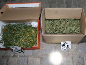 Kriminalisté z TOXI týmu zadrželi dealera, prodával drogy více než pět let