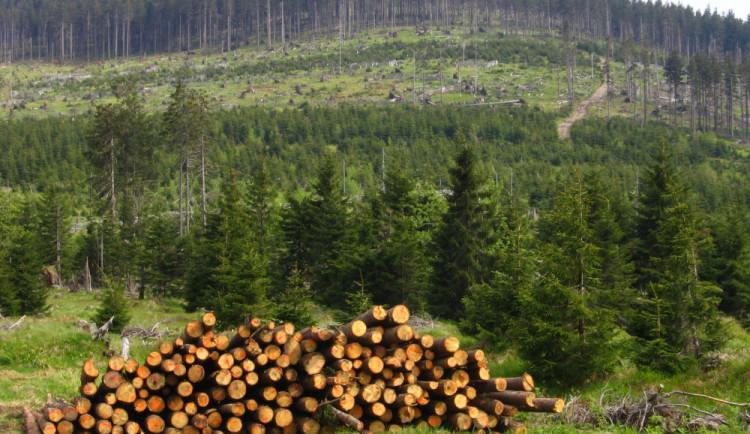 Ekologičtí aktivisté požadují v Jeseníkách zrušení výjimek kácení